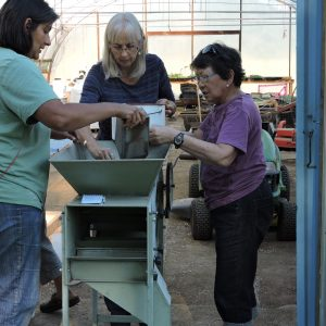 Catherine uses the winnower for her barley